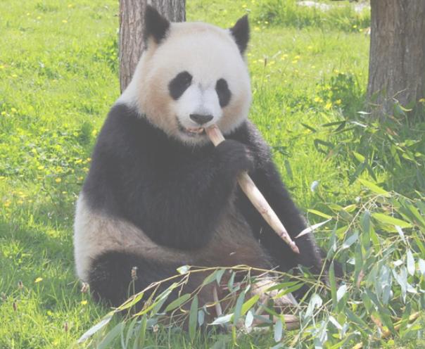 Audit Google Panda, le filtre contre le contenu de mauvaise qualité !